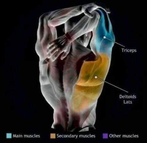 etirement dorsaux et triceps